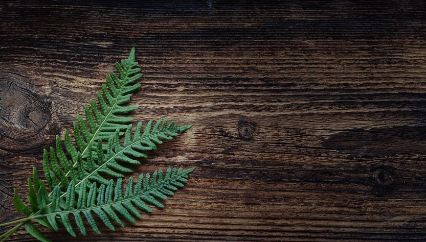 Fern with wood background